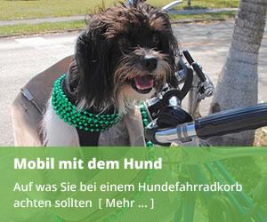 Hundefahrradkorb - Mobil mit dem Hund