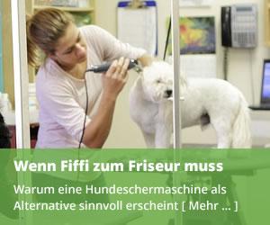 Hundeschermaschine Vergleich