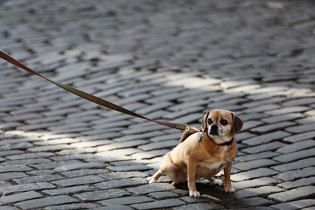 Hundeleine vergleich leder hundeleine