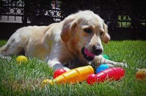 Intelligenzspielzeug für Hunde