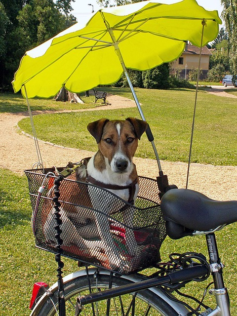 Tigana - Hundefahrradkorb für Gepäckträger aus Weide 60 x 39 cm mit Metallgitter + Kissen