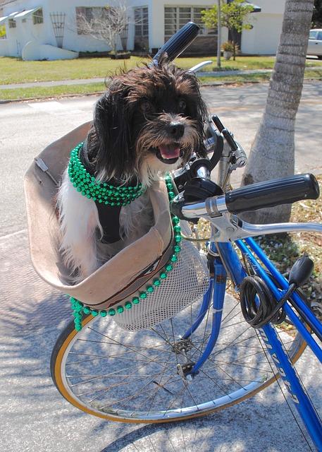 Hunde Fahrradkorb - Hunde Fahrradkorb